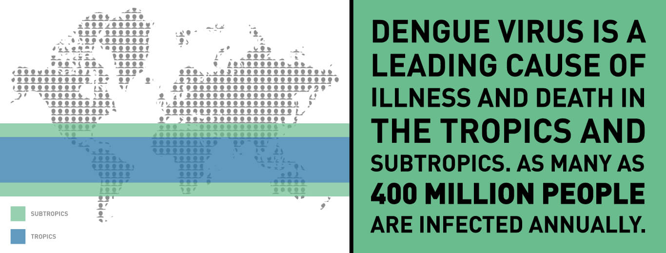Dengue Virus is a leading cause of illness and death in the tropics and subtropics. As many as 400 million people are infected annually.