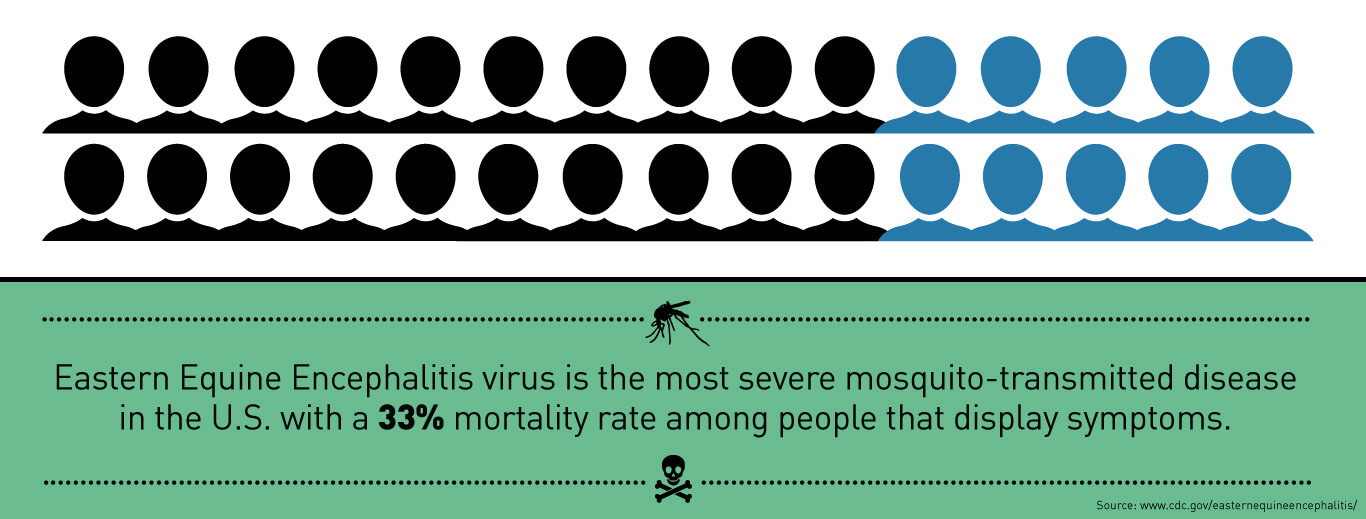 Eastern Equine Encephalitis Virus is the most severe mosquito-transmitted disease in the U.S. with a 33% mortality rate among people that display symptoms.