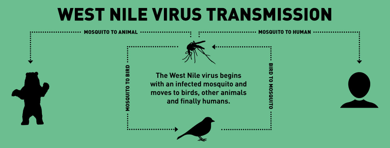 an introduction to the history of the west nile virus A —following the introduction of west nile virus (wnv) into the united states, in  new york city in 1999, from its historical range in the eastern hemisphere, this.